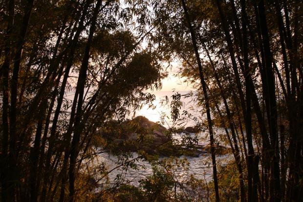 thumb img 8245 1024 copy Ponta dos Ganchos, Santa Catarina