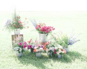flores 6 300x239 flores 6